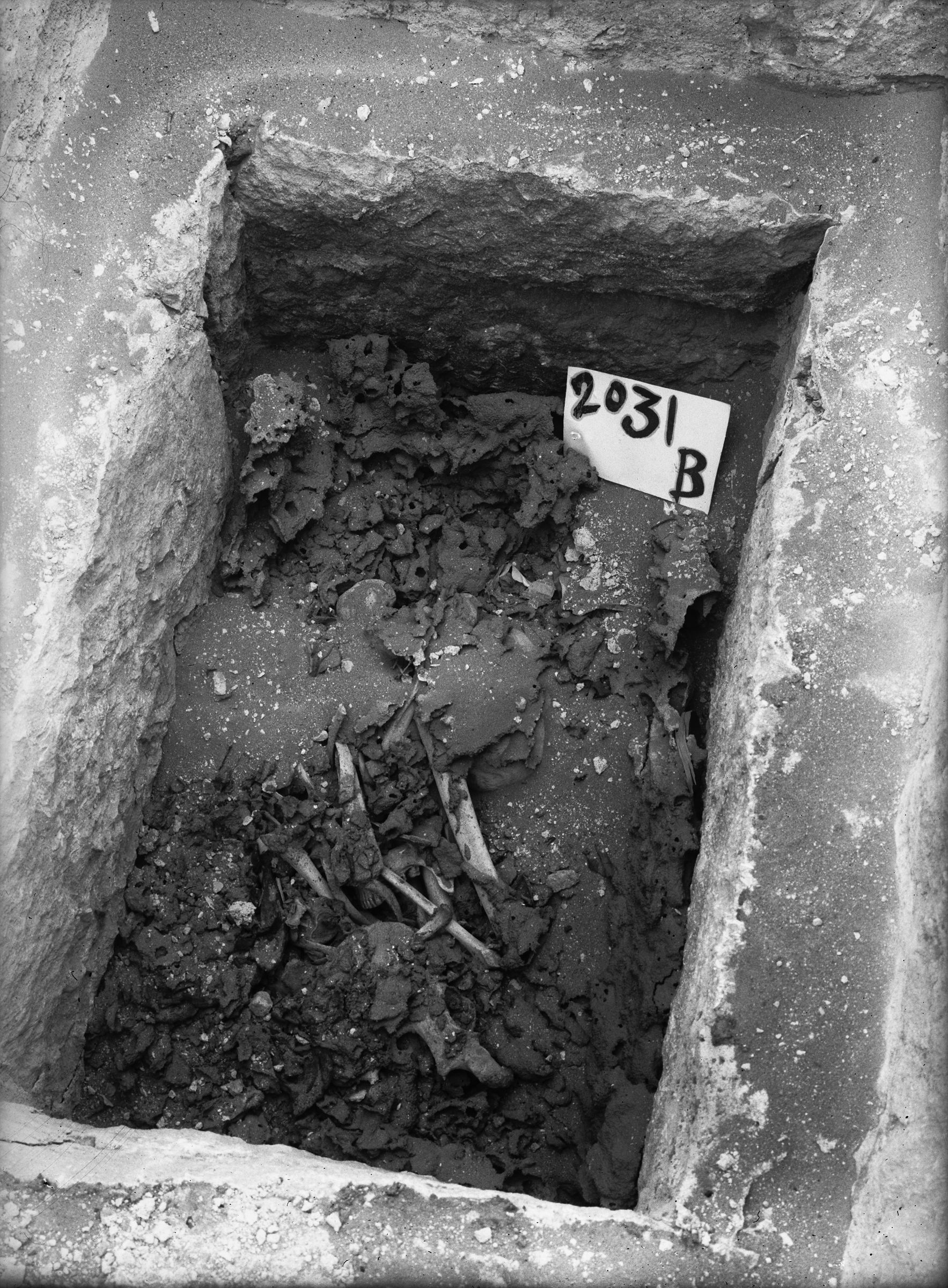 Western Cemetery: Site: Giza; View: G 2230+2231