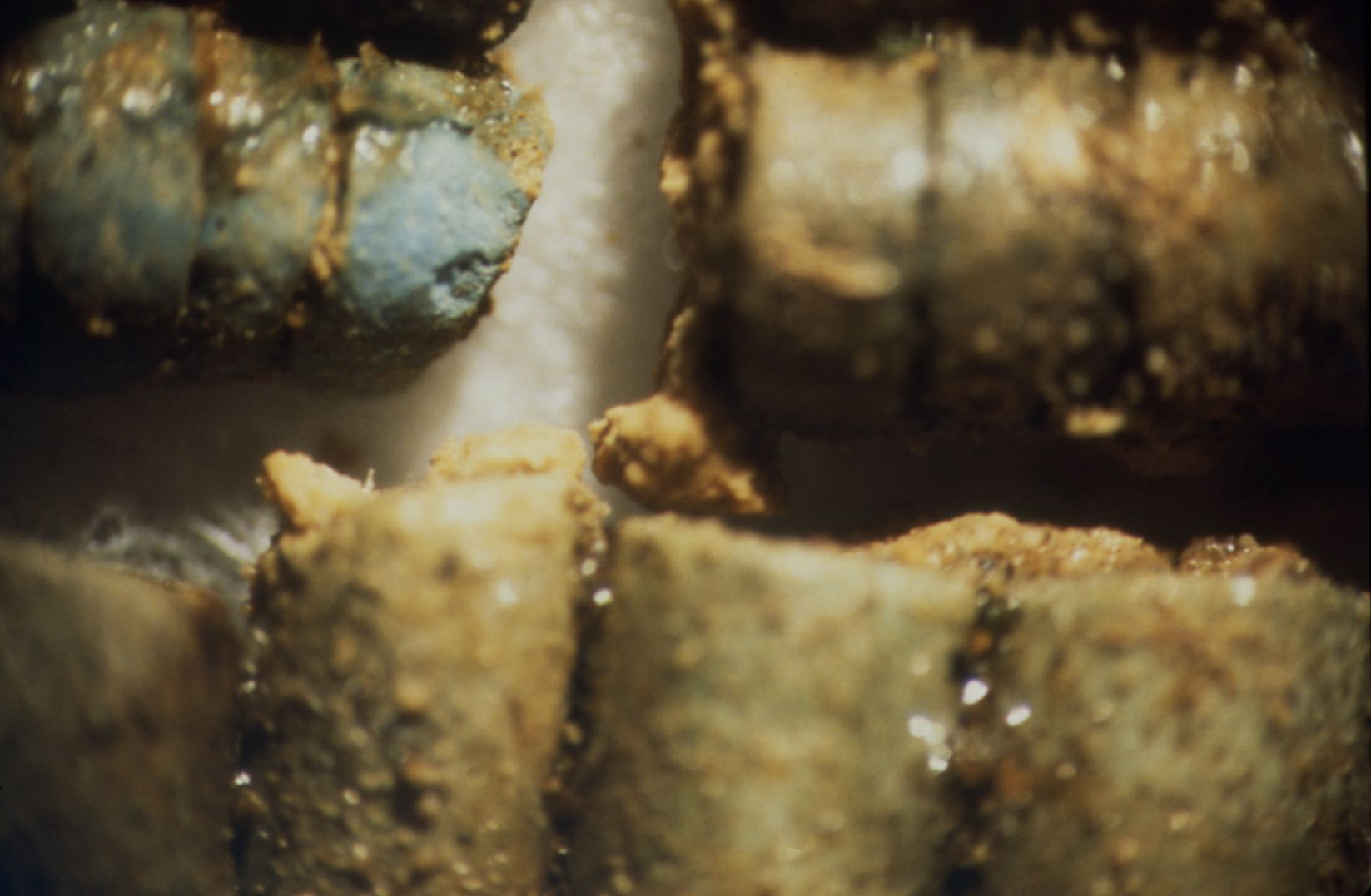 Object(s) photograph: Site: Giza; view: G 7442 (formerly G 7440 Z)
