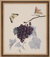 A Butterfly and Moth with a Bunch of Blue Grapes