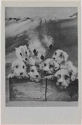 La Mélancolie Gâteuse Des Chiens Comme Une Vertigineuse Descente En Ski/senile Mélancholy [Sic] Of Dogs Like A Dizzy Ski-Glide