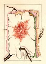 Illustration of colored pages with unlabeled seaweed on top page, and twigs, undated