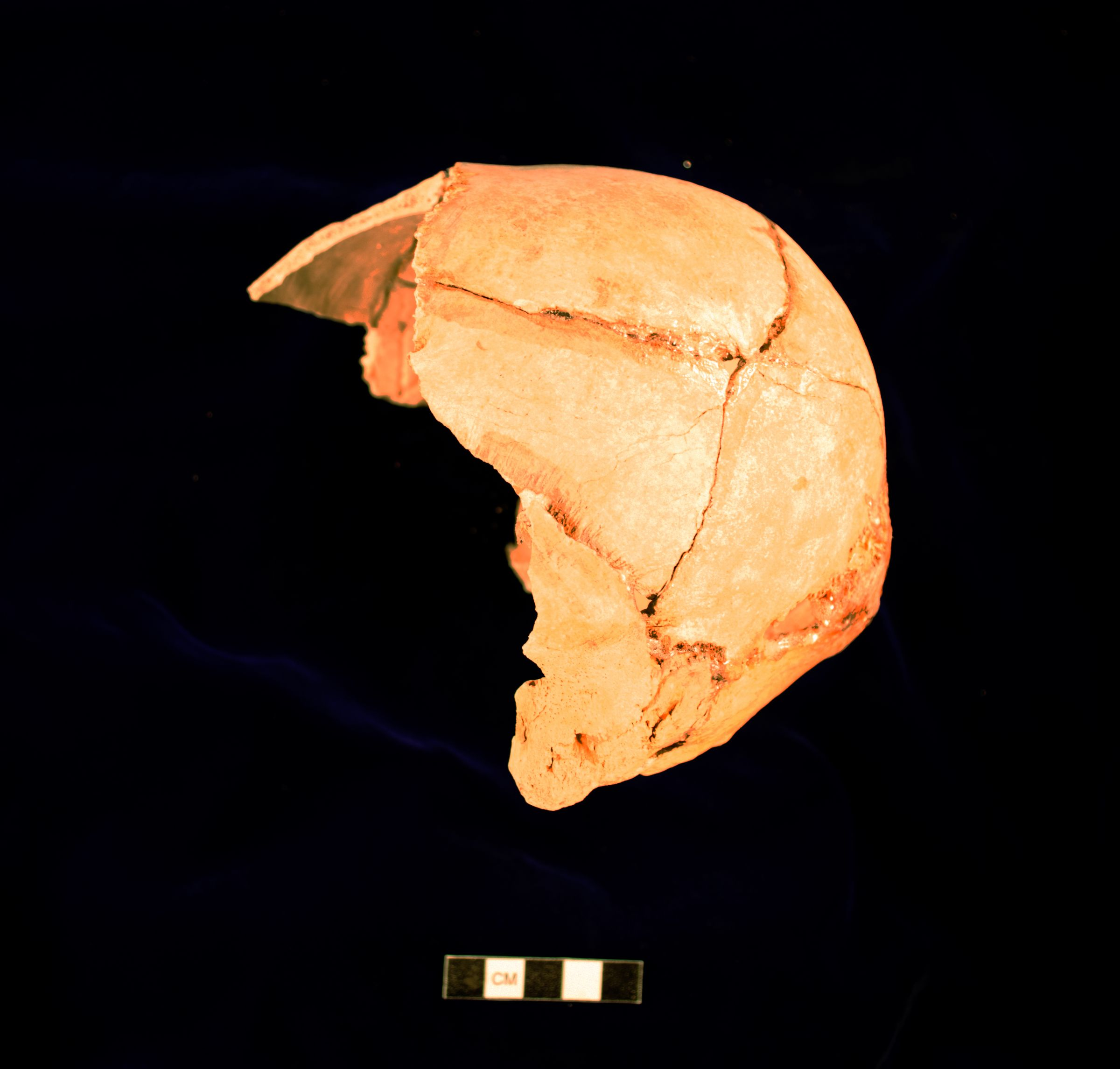 Object(s) photograph: Site: Giza; View: G 2175