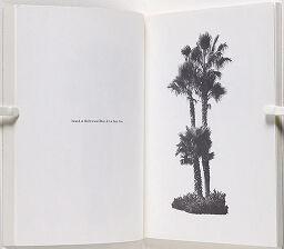 A Few Palm Trees