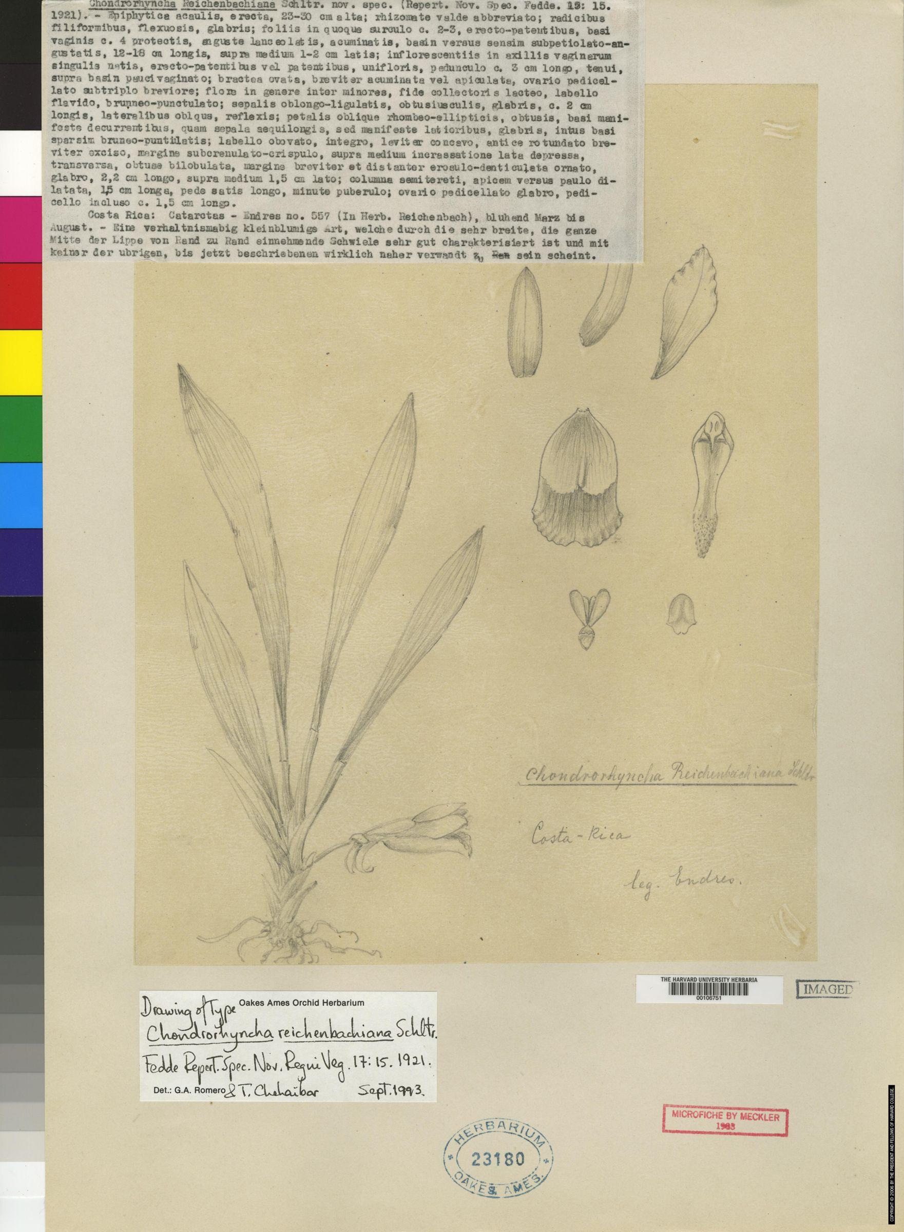 Chondrorhyncha reichenbachiana image