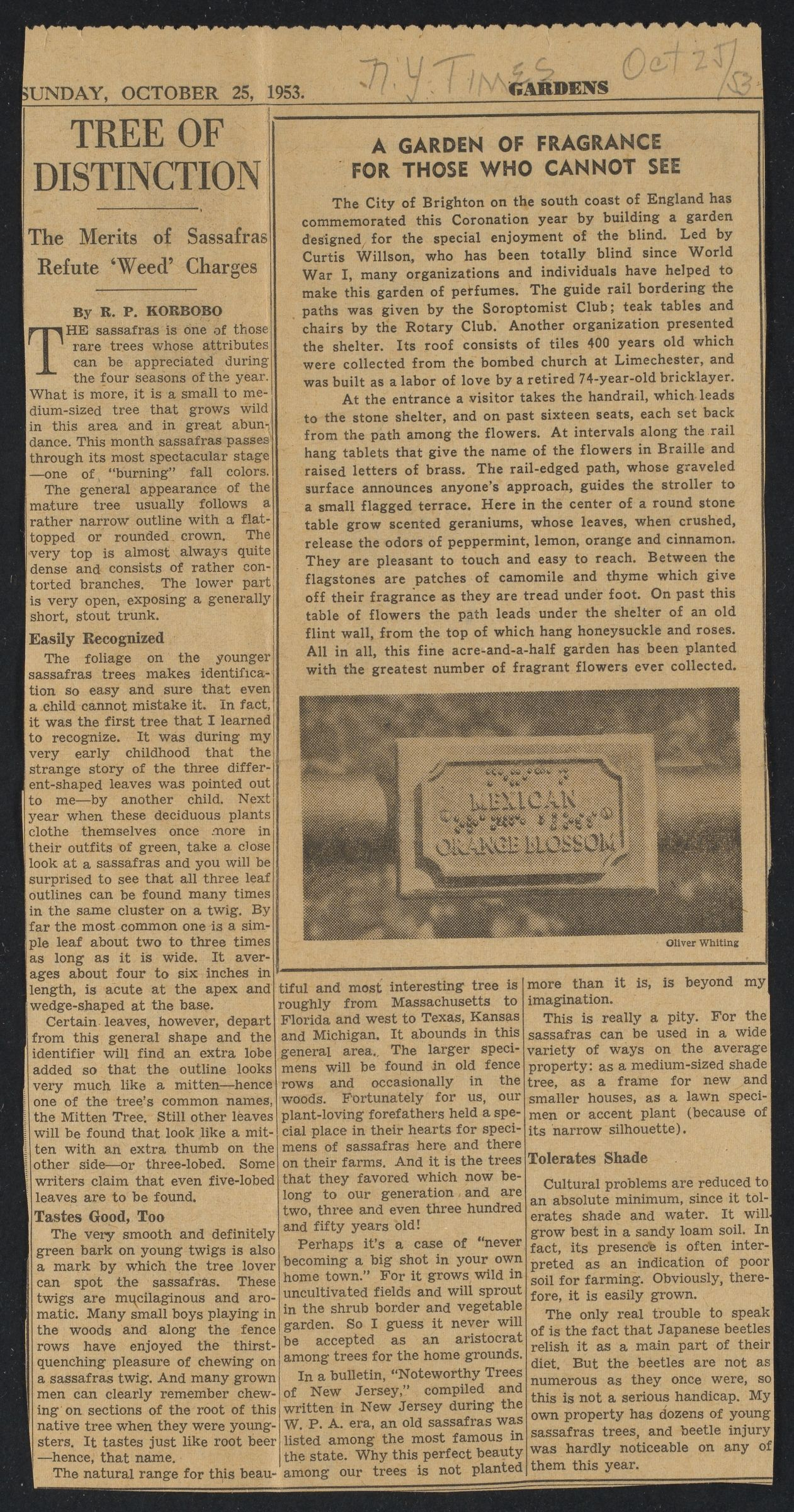 """Newspaper clipping """"A Garden of Fragrance for Those Who Cannot See"""" published in N.Y. Times, October 25, 1953"""