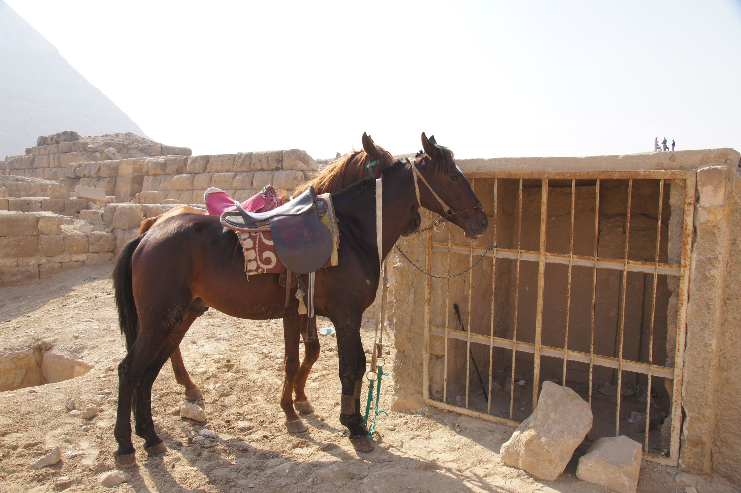 Western Cemetery: Site: Giza; View: G 2337 X, G 5480