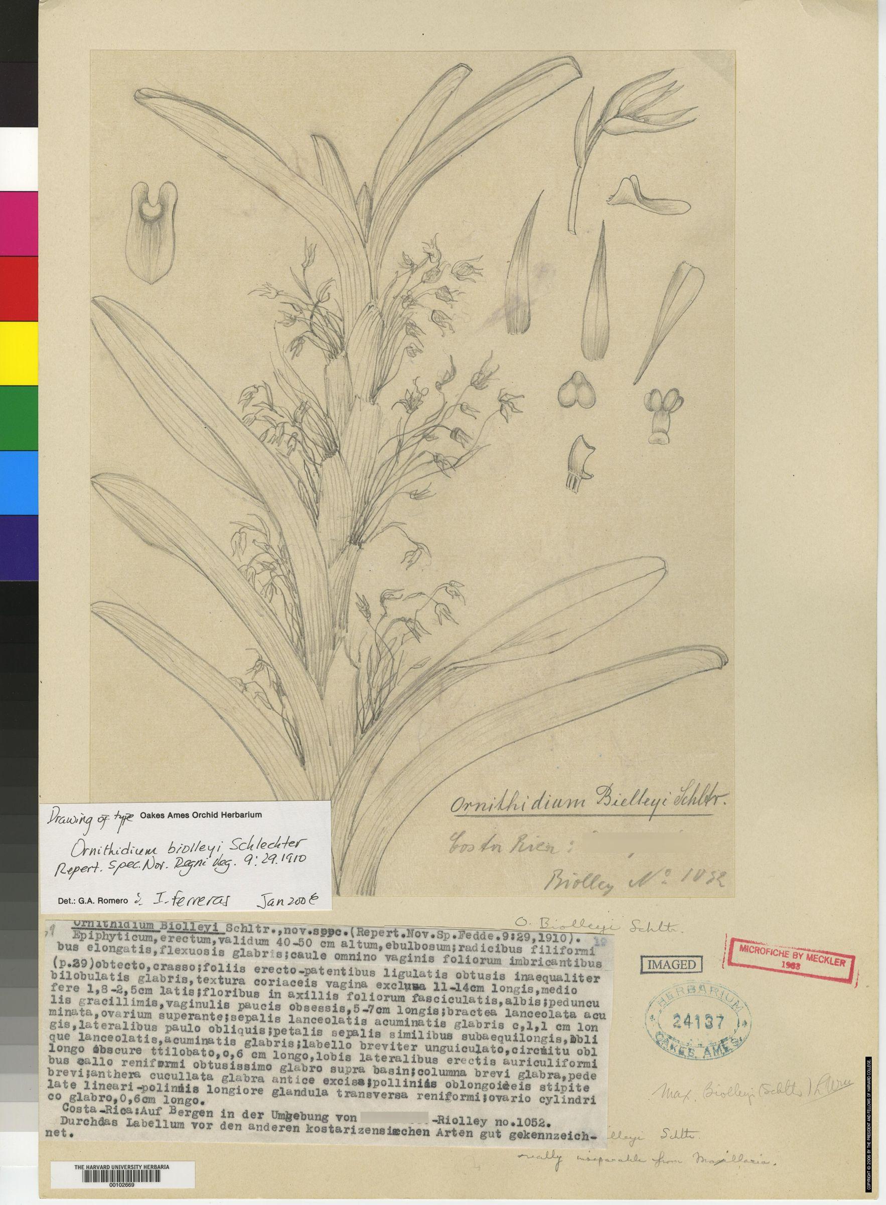 Maxillaria biolleyi image