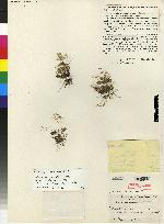 Trichosalpinx carinilabia image