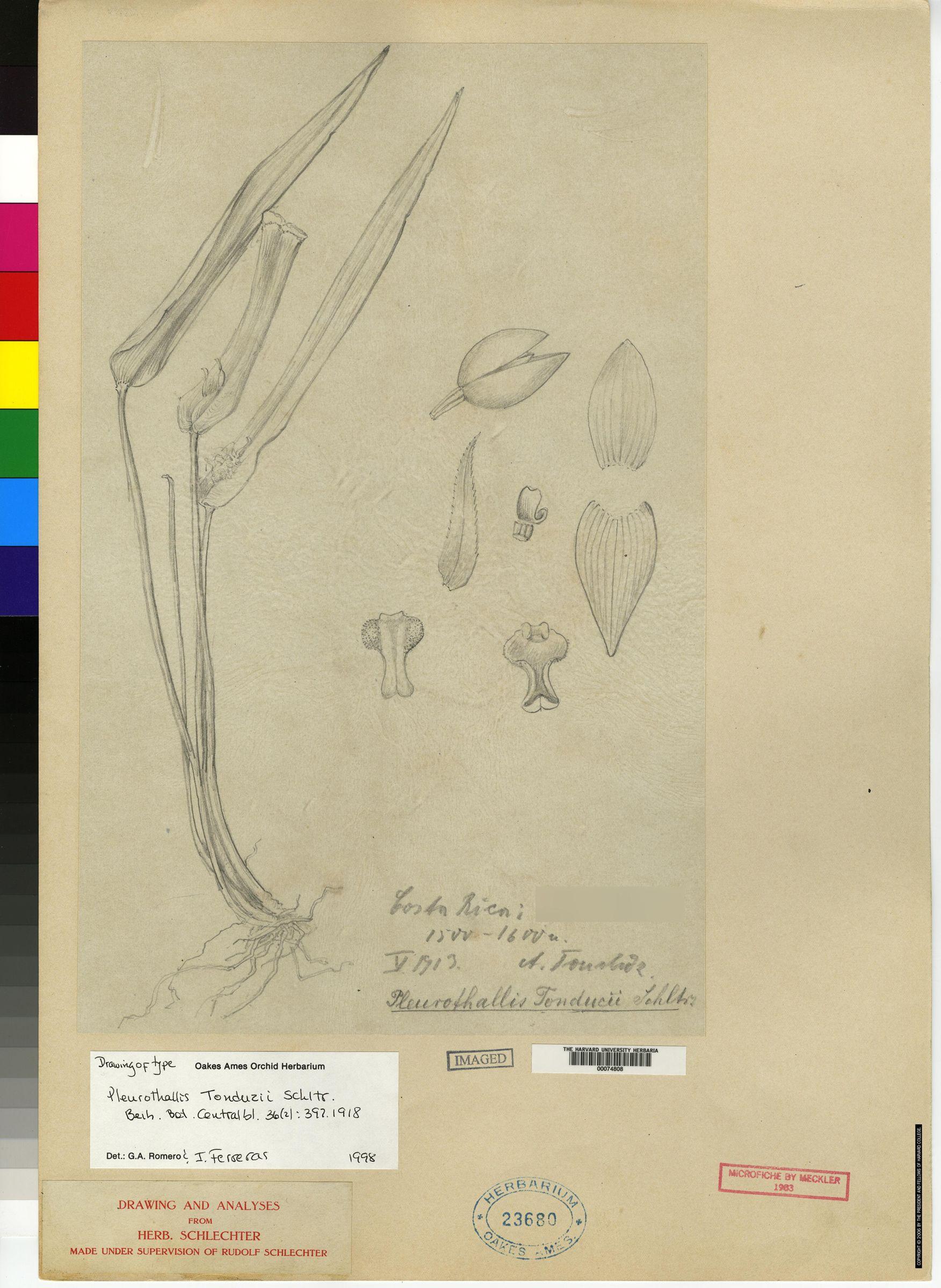 Pleurothallis tonduzii image