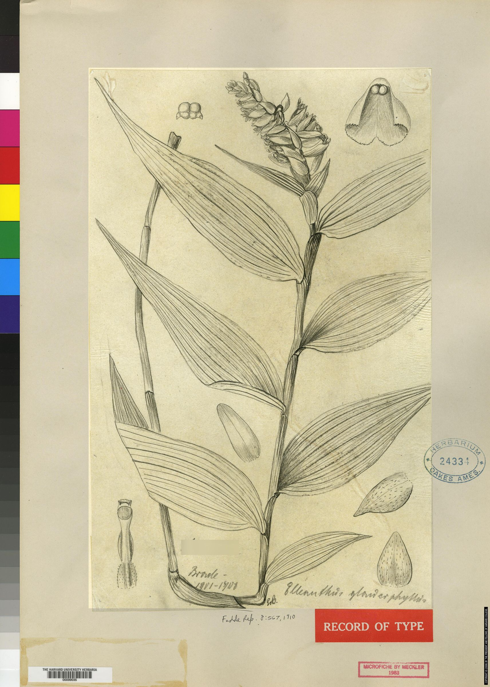 Elleanthus glaucophyllus image