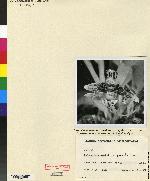 Kefersteinia parvilabris image