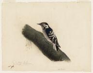 Woodpecker. Near Nantes, France,  Digital Object