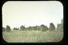 E.M. Barton Estate, Hinsdale, Illinois, United States