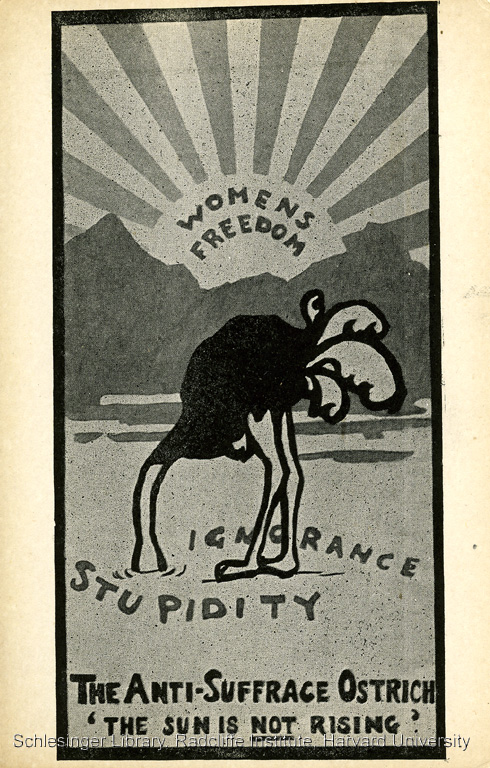 1910 Postcard: The Anti-Suffrage Ostrich 'The sun is not rising.'