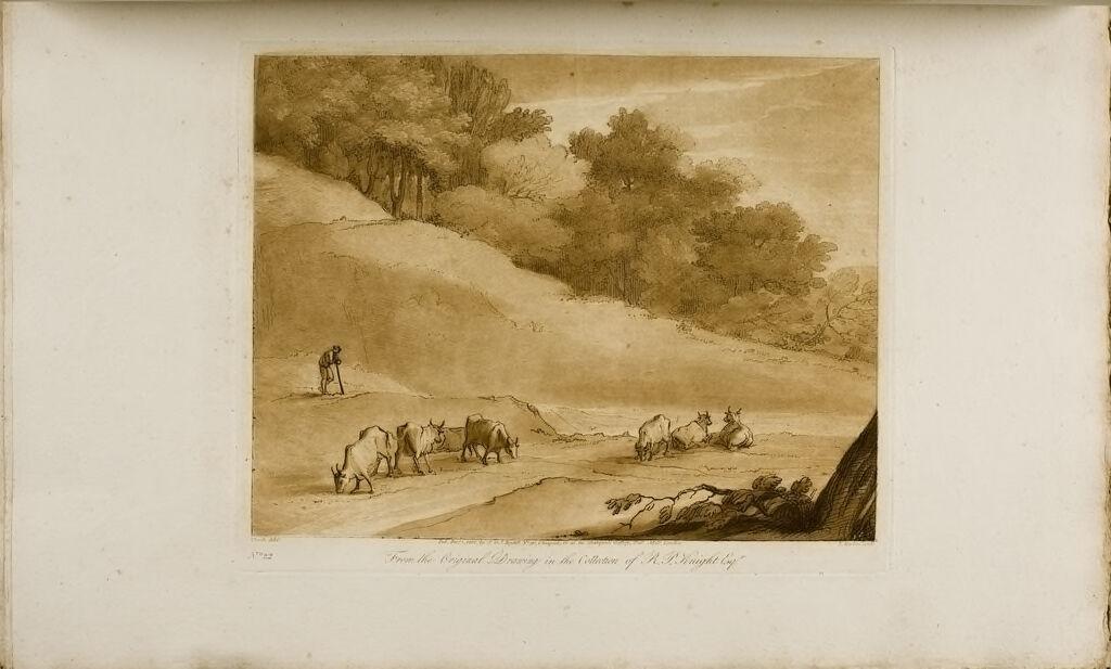 A Study, Cattle Grazing