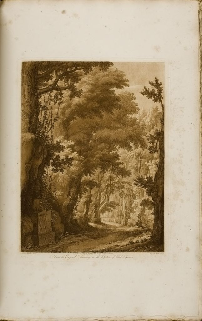 A View From Nature, Wooded Scene